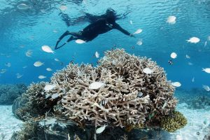 Four Seasons Landaa Giraavaru Malediwy Chilli Travel (16)